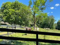 Saddle-up-Stables-ranch-Lake-George-horse-rides.jpg